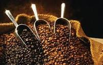 Increase Coffee (Organo Gold) Coffee & Tea
