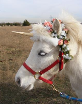 Kangaroo Kate's Pony Rides and Pony Parties