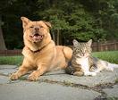 Top Ten Dog & Cat Pet Insurance