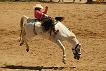 riding and barrel racing other events include state fairs horse shows