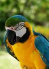 Tropical Bird Entertainer with Jim & Bob The Bird