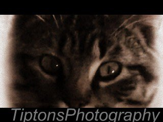 TiptonsPhotography