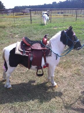 PoniesPlus - Pony Rides